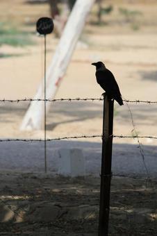 Pakistan Bird 5