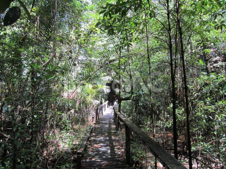 マレーシア サラワク州 シミラジャウ国立公園の写真