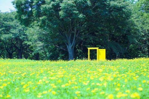 波斯菊場和黃門