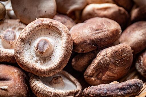 표고 버섯의 업, 표고 버섯의 시즈 키 축 / 버섯류