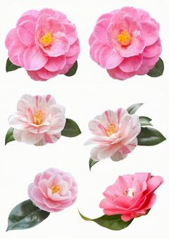 Cut out material Camellia set with leaves