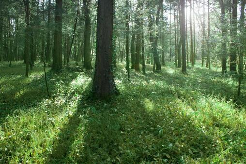 Trees_forest_113