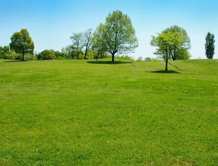 Park lawn