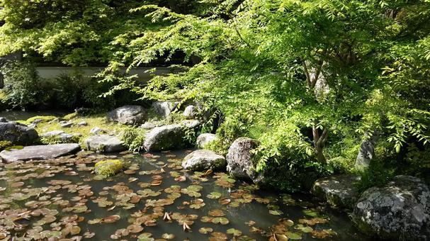 Taima-dera pond