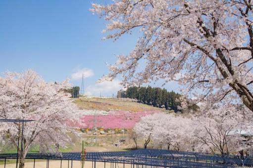 Spring hills full of flowers