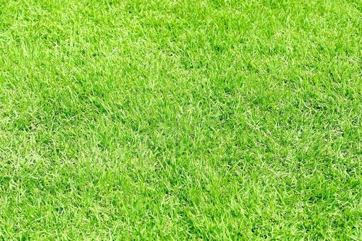 鬱鬱蔥蔥的草坪