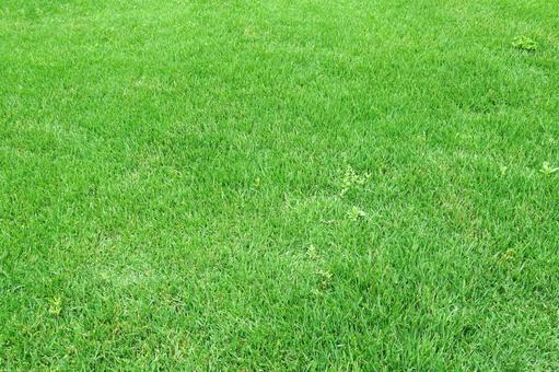Green grass | free background images