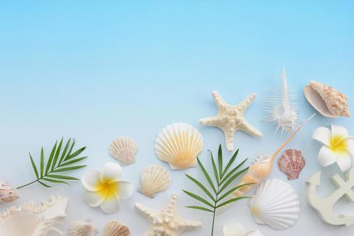 Shellfish Summer Memories