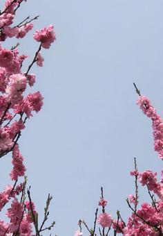 Hanamomo and the blue sky