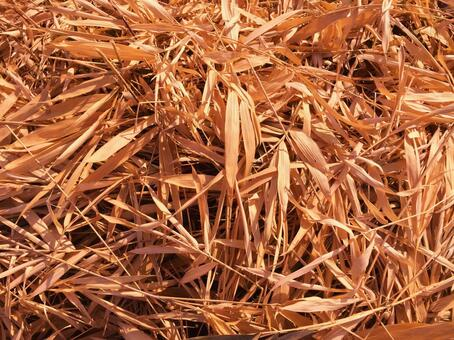 Background material (withered bamboo grass)