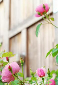 Rose and tree gate door