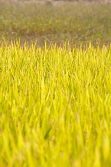 트랙터 경운기 농업 농기구 벼 베기 쌀 농가
