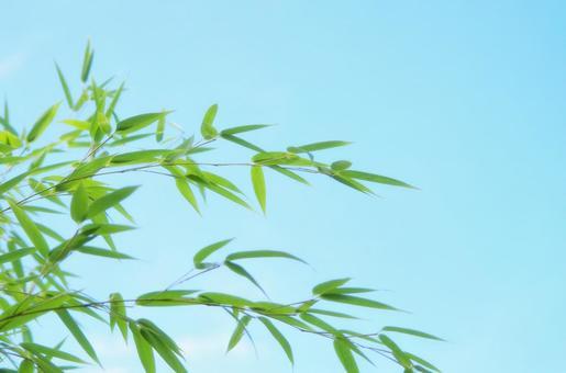 Bamboo leaf slender