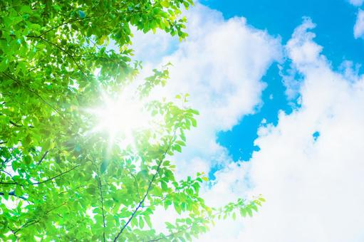Fresh green and blue sky_light