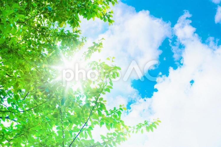 新緑と青空_光の写真