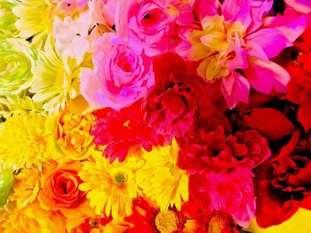 밝은 색상의 꽃