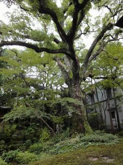 정원의 나무