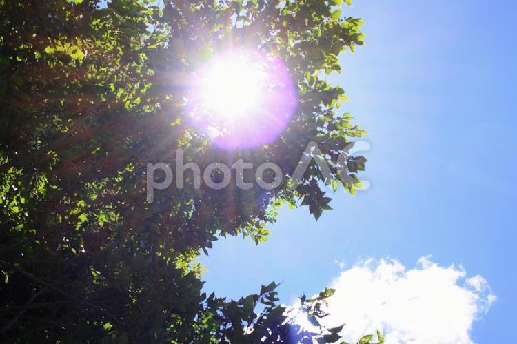 夏の日差し さわやかイメージ背景の写真