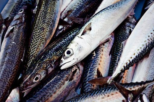 Fishing 13