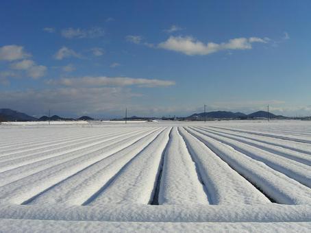 눈 오는 날의 푸른 하늘 001