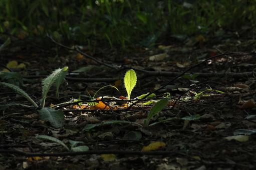 Birth, sprout, sunbeams
