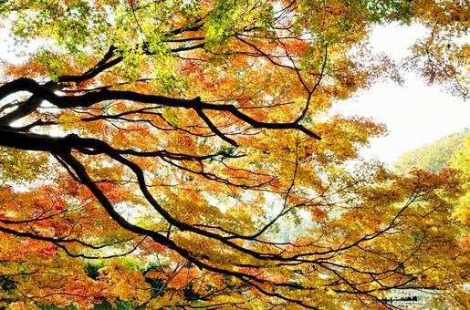 Fall landscape 5