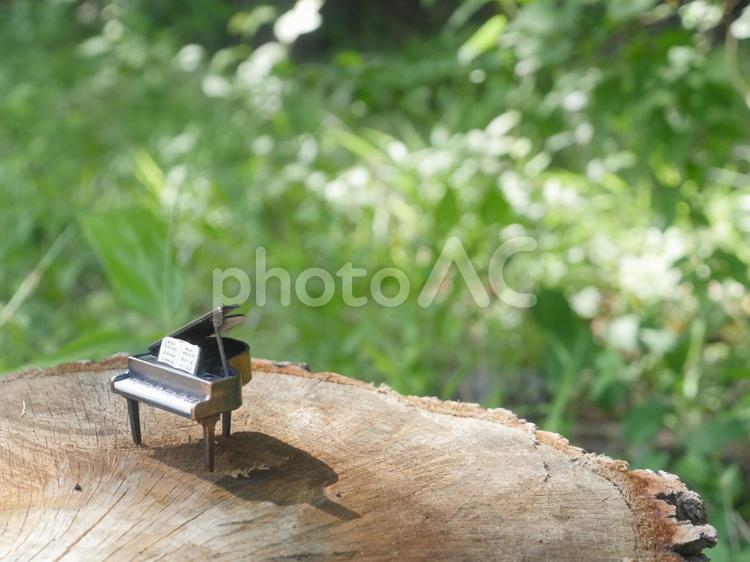森 切り株の上のピアノの写真