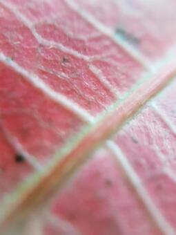 Red leaf microscope