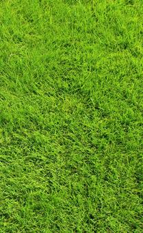 Lawn vertical image