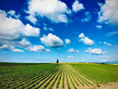 Summer scenery of Hokkaido and Biei