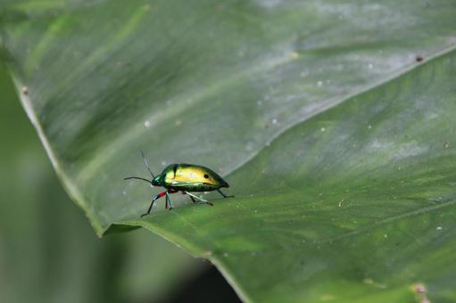 Stink bug and iridescent