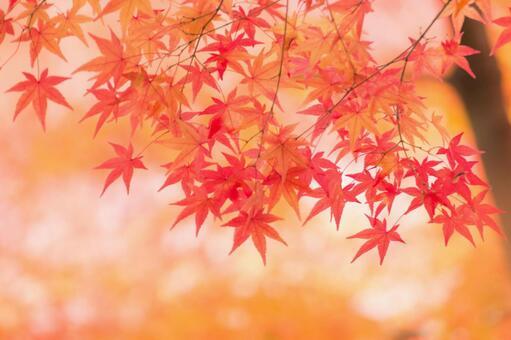 Kyoto autumn leaves 10
