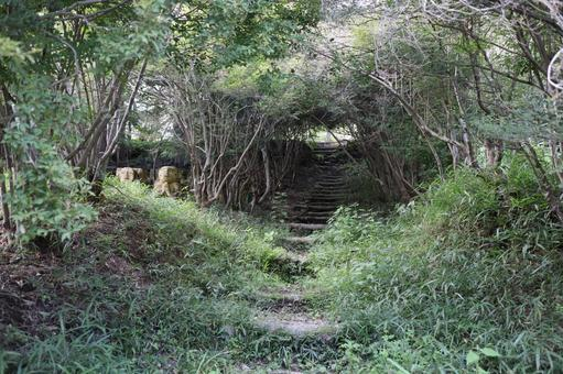 Scenery of Kohoka Nature Park September 2021 (48)