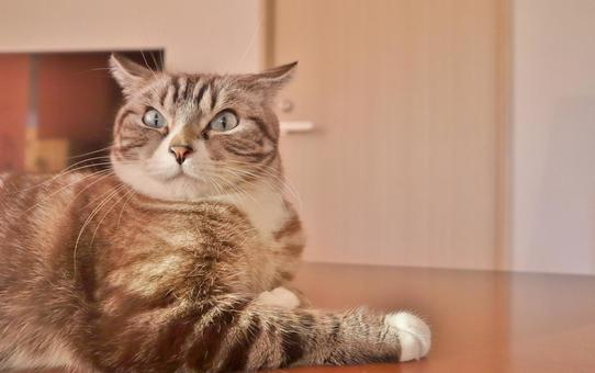 Cat Cat Cat Surprised Cat Surprised Cat Scared Cat