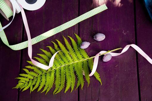 蕨類植物2