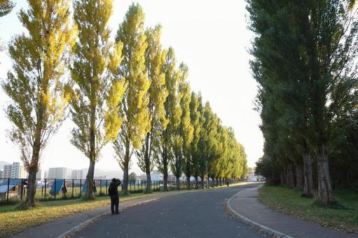 Hokkaido University Poplar Namiki 2