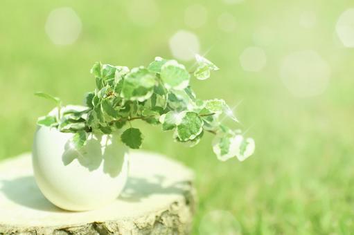 Flower base of egg