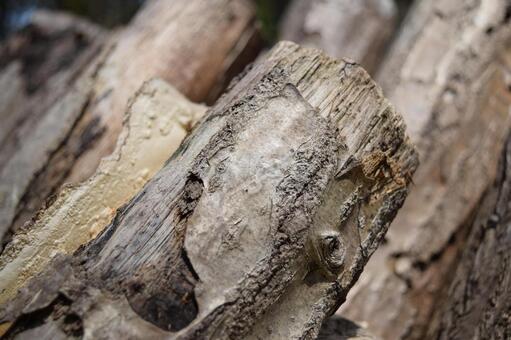 Mushroom log cultivation