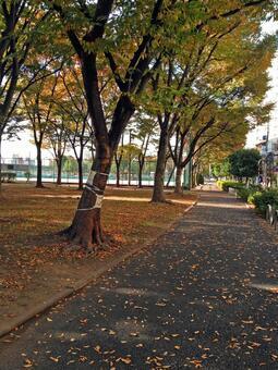 下午/公園下午#1