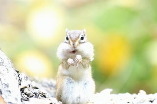 귀여운 다람쥐