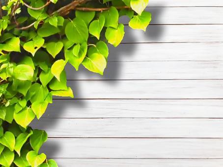 White wood grain and ivy frame Wood grain chloroplast frame