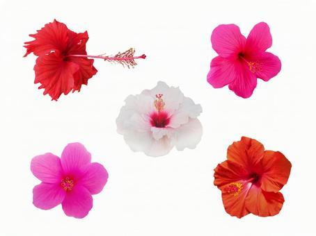 Hibiscus cutout