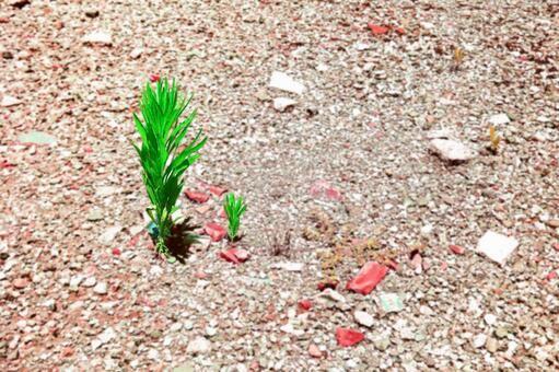 Summer grass of dry ground # 16