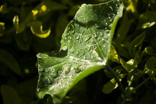 잎에 물방울