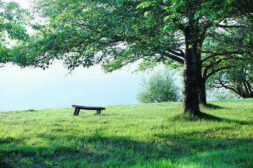 Landscape with bench