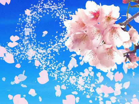 Cherry blossoms dancing in the spring breeze 2