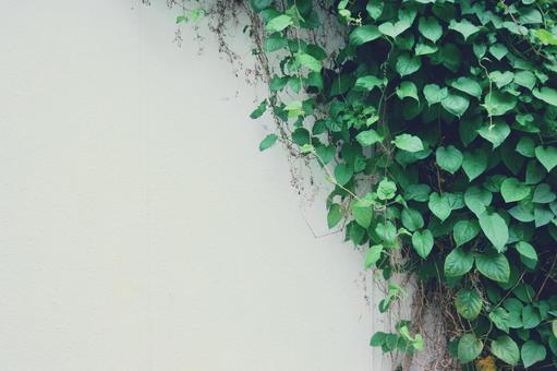 Background Wall and ivy