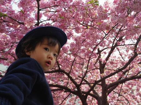 벚꽃과 어린이 3
