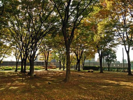 下午/公園下午#2