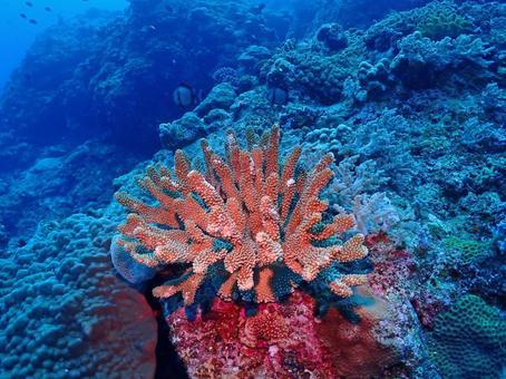 Mysterious undersea coral reef / Kerama Islands (Okinawa)